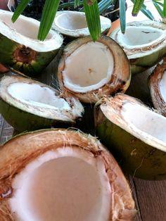 Cocos Orgânicos   Direto do nosso coqueiro para a produção de leite de coco dos nossos smoothies. Coconut, Fruit, Food, Coconut Milk, Essen, Meals, Yemek, Eten