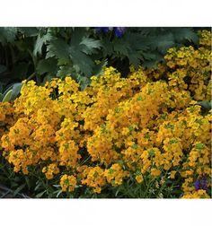 Les meilleures association de plantes vivaces allium for Briant plantes