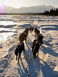 Dogsledding - Ontario