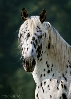 An Appaloosa may look weird because of the spots but it is an amazing, beautiful animal.:)