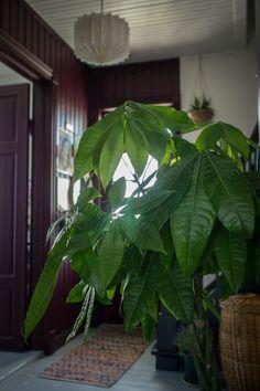 plante verte lyon