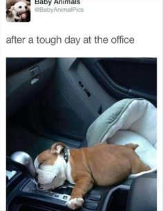 Random LOL Funny Animal images (04:25:11 AM, Monday 23, March 2015 PDT) – 10 pics