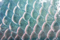 fish scales close up - Google Search
