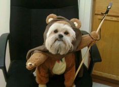 Dog in Ewok costume!!!