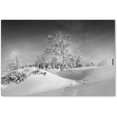 Trademark Fine Art Dressed For Winter B Canvas Art by Philippe Sainte-Laudy, Size: 22 x 32, White