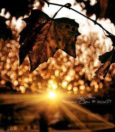 The bokeh (out of focus area) doesn't distract from the subject-the leaf Bokeh Photography, Amazing Photography, Good Morning Sunshine, My Sunshine, Beautiful Moments, Beautiful Images, Out Of Focus, Drawing, Graphic