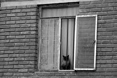 gato de condominio social