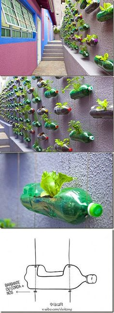 DIY-hanging garden from old soda bottles.