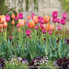 Get high impact in your spring garden! Just give tulips a spot in full sun with well-drained soil, a