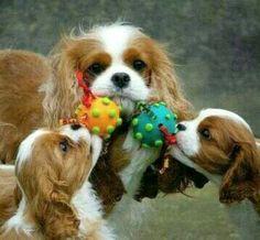 Playtime!