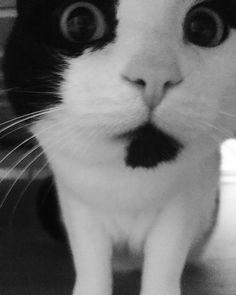 Manger noir mamie chatte