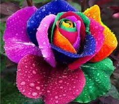 Flores Mas Hermosas Del Mundo Y Su Significado   Frases Cristianas De Amor