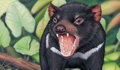 A hefty bone-crunching extinct relative to the Tassie devil discovered