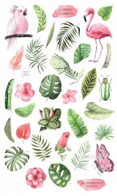 Flamingo parrot monstera hibiscus for in Watercolor Tropical Flowers Clipart. Flamingo parrot monstera hibiscus for in Tropical Flowers, Art Tropical, Tropical Birds, Exotic Flowers, Tropical Prints, Tropical Leaves, Tropical Design, Tropical Animals, Hawaiian Flowers