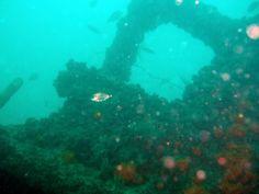 Buceo en Conil. Buceo en el Vapor de la Almadraba con OCEAN ADDICTS 27/07/2014.