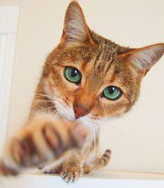 how freakin cute is this cat? by allysonk, via Flickr