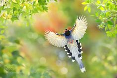 Flying Free by littletree131 ...