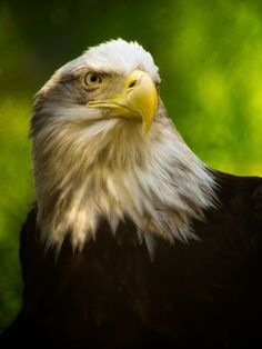 """eagle rights"" by Christie King, via 500px."