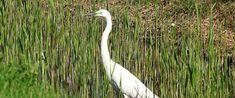 Barangolj velem! Fertő tó és környéke képekben - Ejva.R photography and blog Bird, Animals, Animaux, Animales, Birds, Animal, Dieren