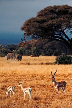 The Spirit of Africa by Frédéric Paolino   - Explore the World with Travel Nerd Nici, one Country at a Time. http://travelnerdnici.com