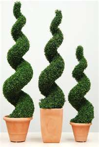 Hedging Buxus Spiral Topiary