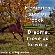 Make your Equestrian dreams a reality. Horse Memes Horse Quotes