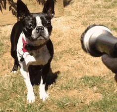 Can't. Handle. It. | 14 Hilarious GIFs That Prove Water Is Endlessly Entertaining