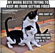 Medical Humor, Nurse Humor, Pharmacy Humor, Funny Relatable Memes, Funny Jokes, Funny Work Humor, Hilarious Work Memes, Sarcastic Work Humor, Funny Cats
