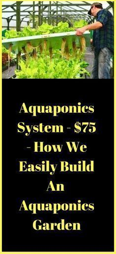 Aquaponics System - $75 - How To Easily Build An Aquaponics Garden http://vid.staged.com/Sgft