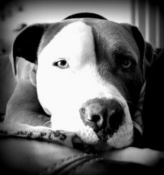 B&W. What a sweet face.