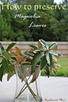 How to Preserve Magnolia Leaves & DIY Magnolia Wreath - I have been preserving my magnolia leaves for about a week now. It's super easy!  All you need is: Magno…