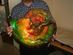 I present to to you: a gigantic opalized ammonite fossil