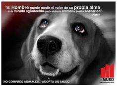 ...TÚ TIENES EL PODER DE DECIDIR SOBRE UNA VIDA INDEFENSA DE UN ANIMAL MALTRATADO Y GOLPEADO CON DESPRECIO A LA CALLE... DE TÍ DEPENDE DARLE TÚ MANO A UN AMIGO, Y ALIMENTARLO CON TÚ CARIÑO, SIENDO SU PTRTECT@R; Y TE ASEGURO QUE TE DARÁ SU CORAZÓN POR LO QUÉ LE RESTA DE VIDA...♥  MIGUEL ÁNGEL GARCÍA