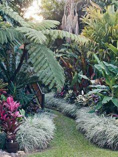 Tropical garden. - Gardening And Patio
