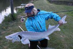 Fisch des Jahres 2014: Der Stör – die News für Angler