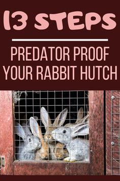 Predator proofing your rabbit hutch is vital, especially if you keep them outdoors. So, how to predator proof your rabbit hutch? Predator proofing a rabbit's hutch can be divided into many different phases. Rabbit Cages Outdoor, Outdoor Rabbit Hutch, Indoor Rabbit, Diy Bunny Cage, Bunny Cages, Raising Rabbits For Meat, Meat Rabbits, Rabbit Hutch Plans, Rabbit Hutches