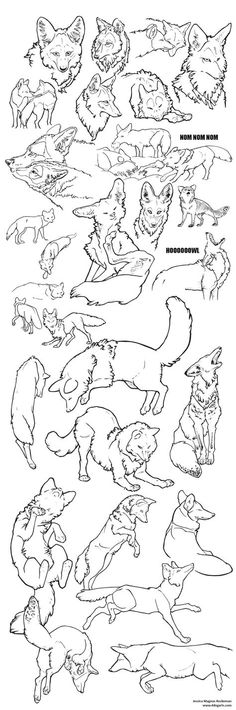 coyote sketches
