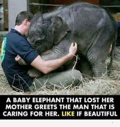 Tell me now how animals don't have feelings/emotions.