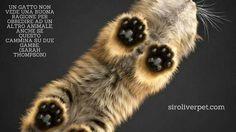 Un gatto non vede una buona ragione per obbedire ad un altro animale, anche se questo cammina su due gambe. (Sarah Thompson)