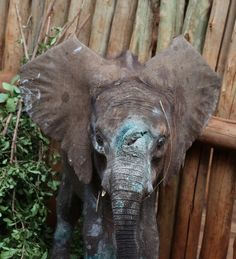 Orphaned Baby Elephant Had Odds Against Him. Now There's Hope.
