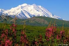 "Mt.McKinley ""Denali"" with fireweed, Denali National Park"