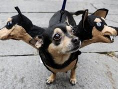 Funny Dog Halloween Costume Ideas