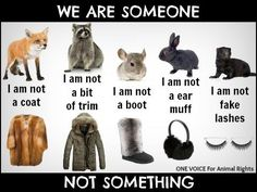 With all the alternatives available, wearing fur is a self-centered act of egotism and a blatant disregard for life. Fur is not a need, it is a selfish want. Don't the animals need their fur more than we do? ~One Voice for Animal Rights Stop Animal Cruelty, Animal Testing, Animal Rescue, Animal Shelter, Orcas, Cane Corso, Wild Life, Sphynx, Pitbull