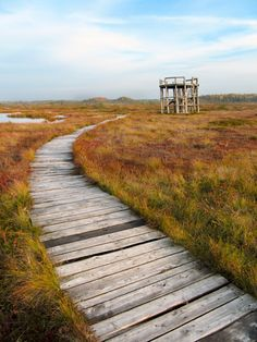 Keava, Estonia - another Amazing Race discovery.  It seems odd to want to visit a bog but you've got to admit it's a beautiful bog.