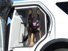 Products | KK-K9-F18-K-PT 2013-2014 Ford Police Interceptor Utility K9