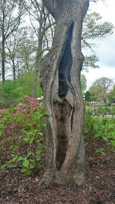 Bremen,  rhododendron park