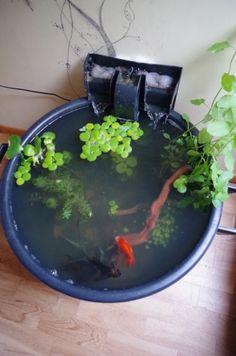 Un mini bassin tonneau dans le jardin... -   JARDIN   Jardins ...