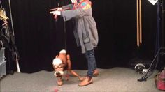 How to control Dog marionette