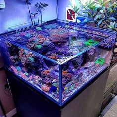 40 cute and unique tank aquarium design to beautify the room - salt water fish tank Aquarium Design, Saltwater Aquarium Setup, Coral Reef Aquarium, Saltwater Fish Tanks, Home Aquarium, Marine Aquarium, Aquarium Fish Tank, Salt Water Fish, Salt And Water
