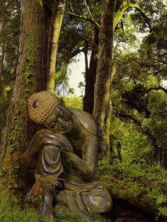 © david Adams Resting Buddha